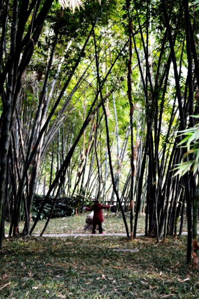 I took this whilst walking through a bamboo 'grove'. This lardy was practising Tai Chi and looked so peaceful.
